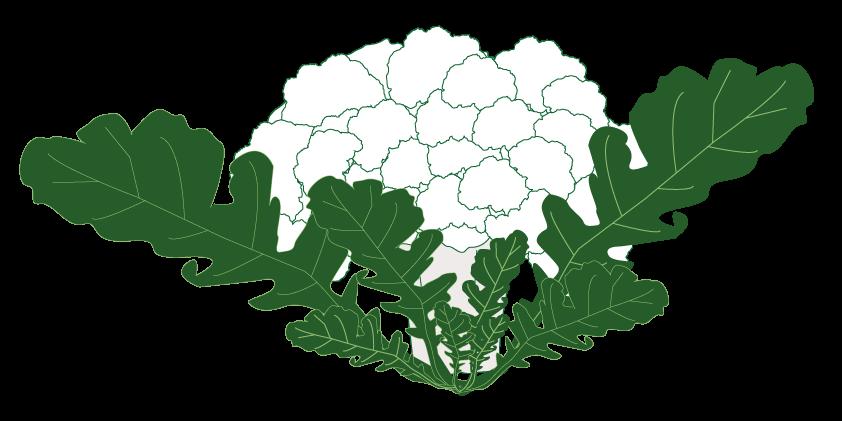 Cauliflower<br>(1kg, ~1 piece)
