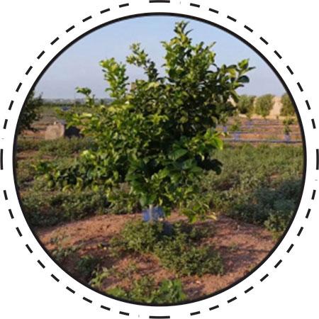 ¡Planta tu árbol!